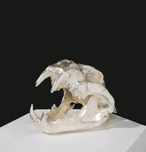 Male Bengal Tiger Skull - Silver