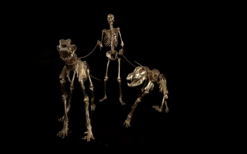 The hunter Human, great Dane and other large Dog skeletons