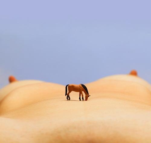 Pottock in the desert